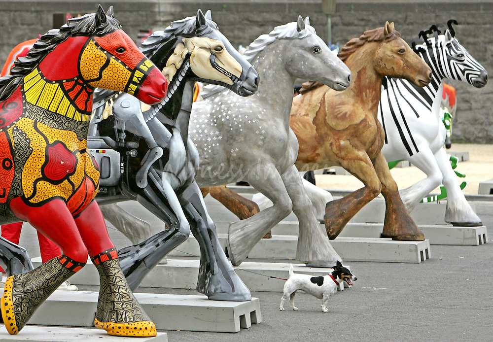 A dog walks past painted horses at the opening of the Horse Parade exhibition at the Jubilee Park in Brussels June 21, 2005. One hundred and seventy horses have been decorated for a three-month exhibition, which will travel across Belgium to promote art before being sold for charity.