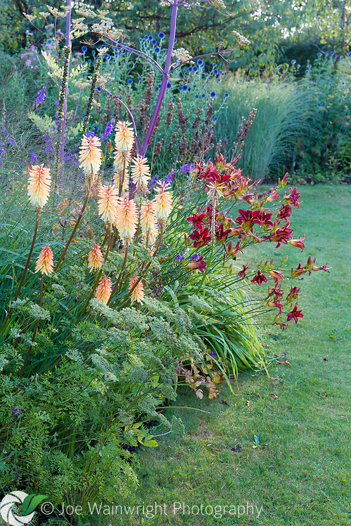 Herbaceous borders at Bluebell Cottage Gardens, Dutton, Cheshire, designed by Sue Beesley. Photographed in July. Planting includes Kniphofia 'Bees Sunset' and Hemerocallis 'Stafford'