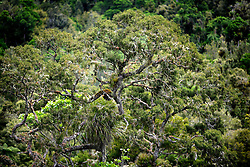 NEW ZEALAND RAGLAN 15DEC07 - Trees and foliage near Bridal Veil Falls, west coast of northern island, New Zealand...jre/Photo by Jiri Rezac..© Jiri Rezac 2007..Contact: +44 (0) 7050 110 417.Mobile:  +44 (0) 7801 337 683.Office:  +44 (0) 20 8968 9635..Email:   jiri@jirirezac.com.Web:    www.jirirezac.com..© All images Jiri Rezac 2007 - All rights reserved.