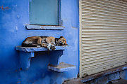One of the several stray dogs in Bundi, uses a step as an improvised bed for a little nap.