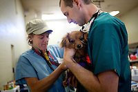 "MCDERMITT, NV - AUG 16:  Lead DVM Kate Kuzminski (L) checks out   ""Skippy"" with Oregon State 3rd year vet student Paul Brady during a clinic sponsored by the Humane Society of the United States August 16, 2009 in McDermitt Nevada.  (Photograph by David Paul Morris)"