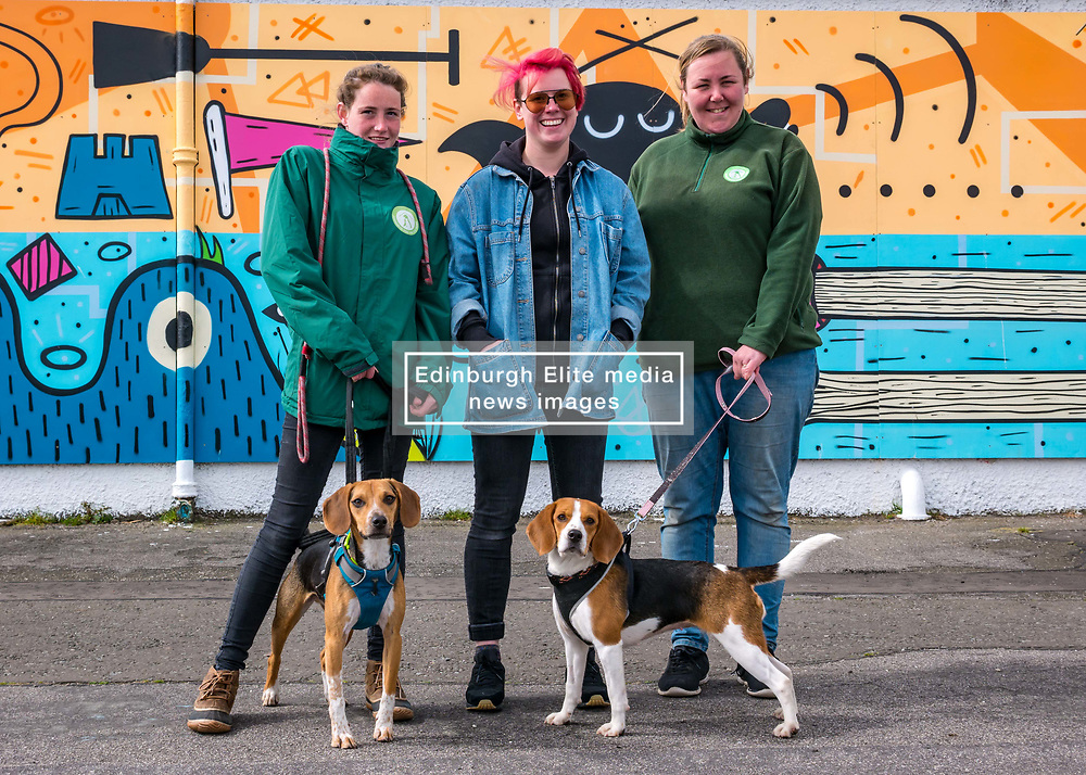 Pictured: Edinburgh Dog & Cat Home Mural Unveiling. , Edinburgh, Scotland, 03 May 2019. Beagles Barney (L) and Bella (R) with Ceilidh and Vicky from the rescue centre with mural artist Katie Guthrie. Both dogs are looking for a good home. The 80 foot mural is unveiled today as a colourful addition to Seafield promenade. It is designed and painted by local artists Studio N_Name. It depicts the people, heritage and environment of the local community and features flora, fauna and historic elements of the local coastline. It has been made possible through through partnership with Edinburgh Shoreline Project. It is on the seafront wall of the dog & cat home which rescues, reunites and rehomes lost, stray and abandoned dogs and cats across Edinburgh and the Lothians, caring for 2,367 dogs and 771 cats in 2018.<br /> Sally Anderson | EdinburghElitemedia.co.uk