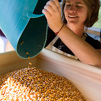 Ami Gignac pours the heirloom yellow dent corn known for its excellent baking qualities into the wood mill where it will be ground into corn flour, cornmeal, and corn grits.