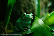 Frogs 2009
