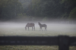 A mare and her foal in Bullitt County, Friday, Aug. 27, 2010 at Ridgeway Farm in Shepherdsville.