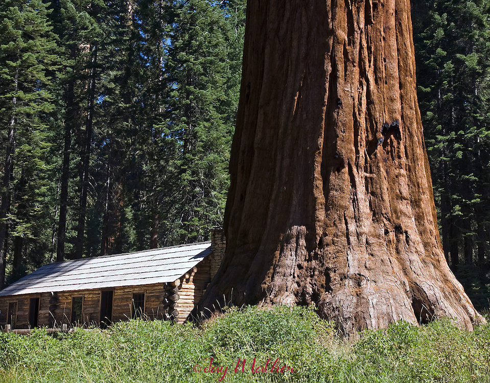 The site of the original Galen Clark cabin in the Mariposa grove of giant Sequoias.    The building is now a small visitor center.
