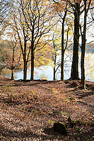 Anglezarke lake in Lancashire with Beech wood in autumn