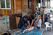 Rome May 6 2008.Rom's camp Casilino 900.Romani  bosnian prepare a lamb for lunch
