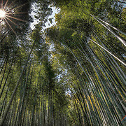 The walking paths that cut through the bamboo groves are particularly attractive when there is a light wind and the tall bamboo stalks sway gently back and forth. The bamboo has been used to manufacture various products, such as baskets, cups, boxes and mats at local workshops for centuries