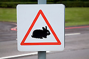 Triangular road sign of baby rabbit