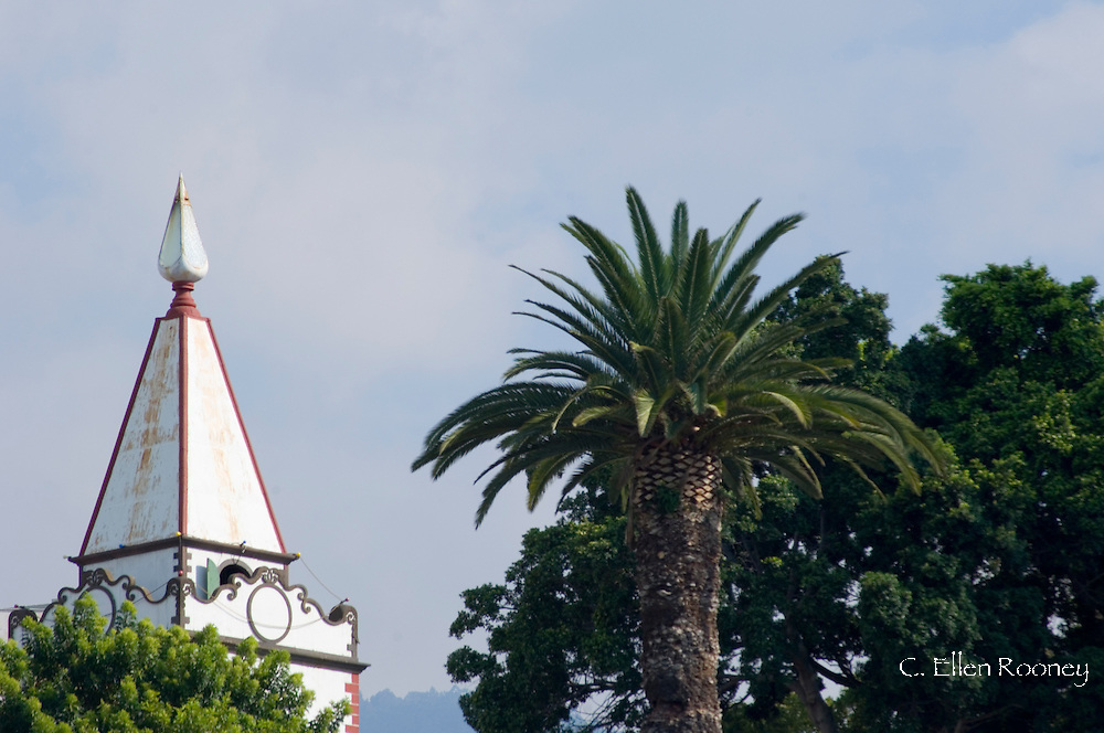 A church belltower and palm trees.  Funchal, Madeira, Portutgal