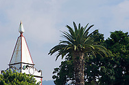 A church belltower and palm trees.  Funchal, Madeira, Portutgal