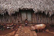 A young girl eating a snack sitting on the doorstep of her thatched roof house in a Mayan village in the Yucatan, Mexico as a pig comes by to sniff for food scraps.