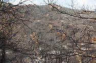 Corsica. France. coutryside burnt by the fire  in Ortole valey   /  la campagne apres un incendie dans la vallee de l ortolu, propriano