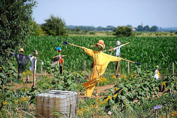Nederland, Ooijpolder, 14-7-2010Vogelverschrikkers in allerlei soorten. Ze zijn gemaakt door kinderen en staan midden op een akker waar in de zomer groenten worden geteeld door schoolkinderen van verschillende basisscholen. Het schooltuintjesproject is een initiatief van het Milieu educatie Centrum.Foto: Flip Franssen/Hollandse Hoogte