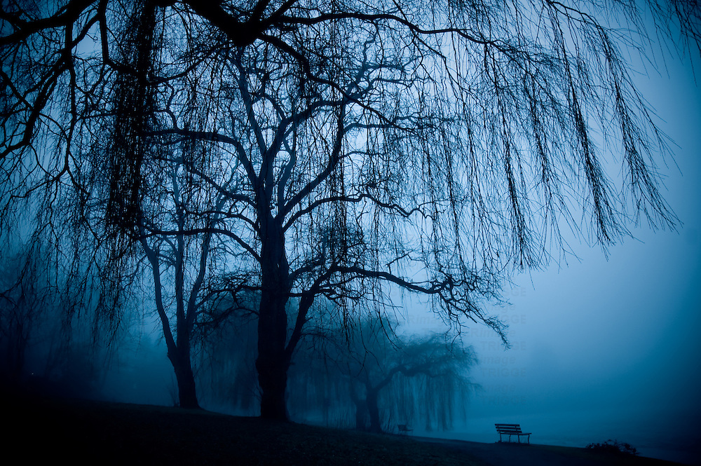Two bench's and weeping willow trees in the fog at Lost Lagoon in winter.