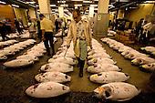 TSUKIJI FISH MARKET IN TOKYO - JAPAN