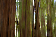 Lost in Motion-The Redwood Series
