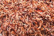 Sun-dried prawns at a market, Malindi, Kenya