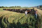 Ranchers moving an electric fence in Oregon's Wallowa Valley.