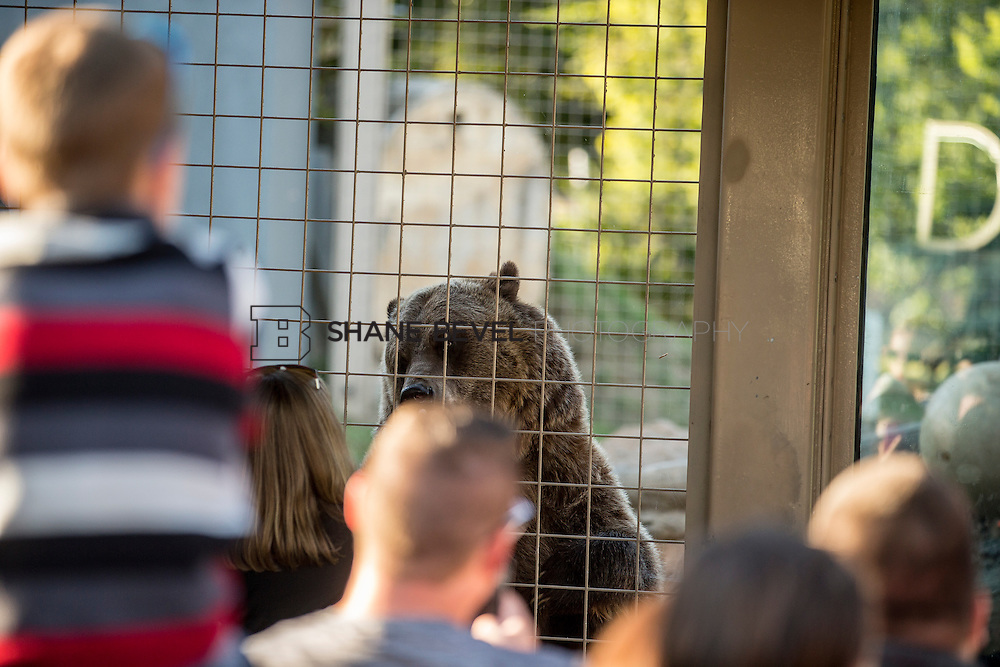 10/8/16 5:49:13 PM --  SFHS All-Employee Safari at the Tulsa Zoo. <br /> <br /> Photo by Shane Bevel