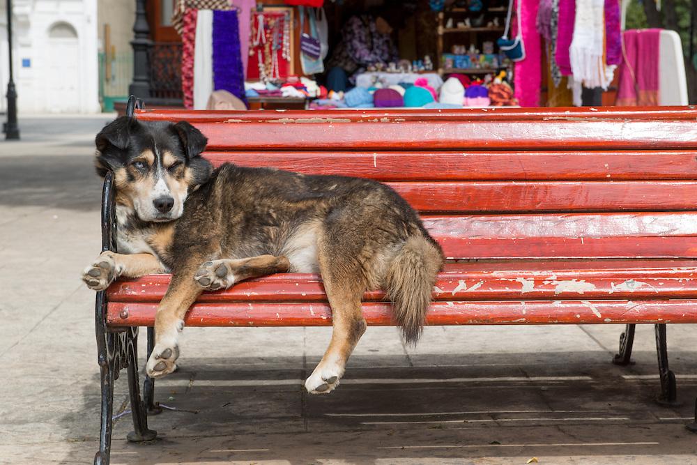 Dog Sleeping on Red Bench, Punta Arenas Chile