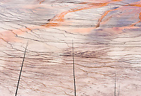 A detail view of the Grand Prismatic Springs bacterial mats in Yellowstone National Park, Wyoming, USA.