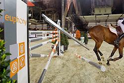 Van Dijck Marc (BEL) - Prince vd Wolfsakker<br /> CSI Antwerpen 2009<br /> Photo © Hippo Foto