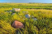Prairie grasslands at sunrise