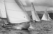 Clio, a 46' Sloop built in 1926, racing under genoa with Sunshine and Moonbeam in the West Kyle.<br />