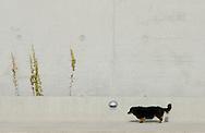 Deutschland, DEU, Berlin, 2002: Ein Hund laeuft an der Aussenmauer des Hundebereichs entlang. Das Berliner Tierheim ist das groesste und modernste auf der Welt. | Germany, DEU, Berlin, 2002: Dog walking on the concrete path along the concrete wall which is around the dog complex. World's biggest and most modern anmial shelter in Berlin. |