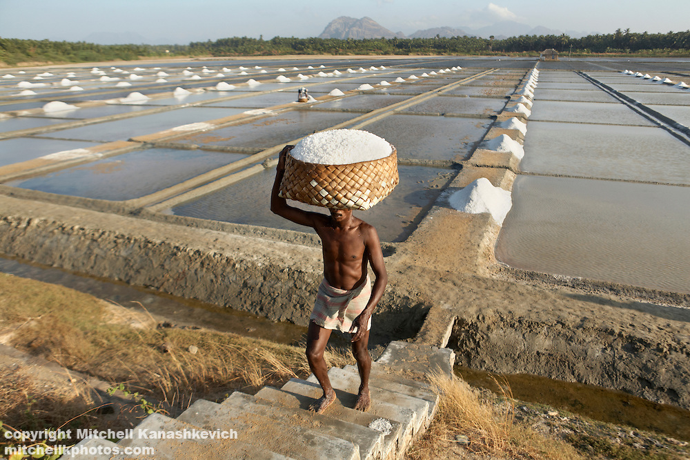 A worker carries salt to a processing factory, Kanyakumari. Tamil Nadu - the most southern point of India