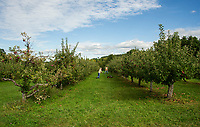 Tom and Craig Wheeler mow and clean up the lanes for apple pickers visiting Stone Brook Farm in Gilford.  (Karen Bobotas/for the Laconia Daily Sun)