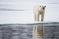 Svalbard 2017  NEW
