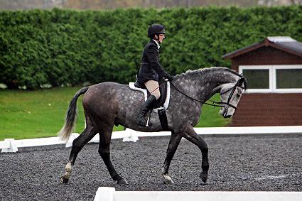 Affiliated dressage at Sheepgate Equestrian Centre..1-11-2009.Horse 257