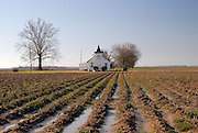 Rural Arfican American Baptist Church off Highway 61 in the Mississippi Delta part of a series of Delta winter photos.(Photo/© Suzi Altman) I have photographed the Mississippi Delta for over a decade. Including the rich cultural heritage, the deep religious roots and the music the land produces. ©SuziAltman