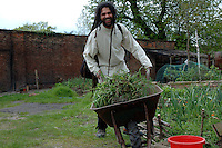 Preparing and clearing soil and planting vegetables in inner city urban garden allotment.