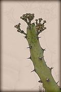 Digitally enhanced image of a closeup of a Cactus in an urban garden