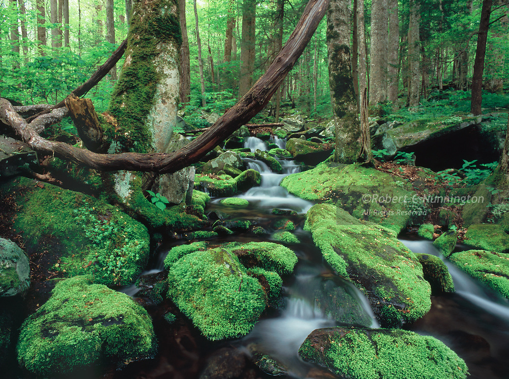 A small stream cascades down through the new growth of springtime in the Great Smoky Mountains National Park, Tennessee, USA