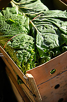 Fresh cut collards available at the North Carolina State Farmers' Market on a fall day.