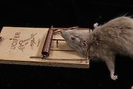 France. Paris. 1st district. Sanitation. Aurouze family rat killlers in Paris. five generations since 1875  Paris  France   / <br /> la famille Aurouze deratiseur depuis 1875, depuis 5 generations a Paris