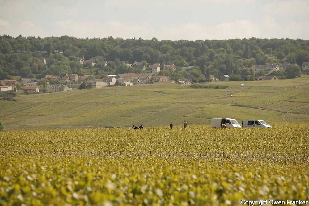 vineyards near Ay, Champagne