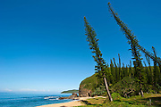 From wind shaped Pine trees in the bay des Tortues on the West coast of Grand Terre, New Caledonia, Melanesia, South Pacific