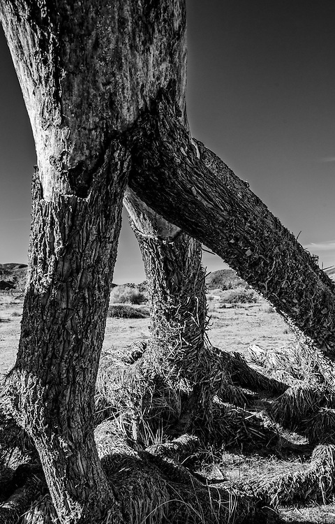 Photos from Joshua Tree National Park December 2013