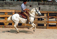 Gypsey Festival with Camargue horses - Horsemanship dispaly