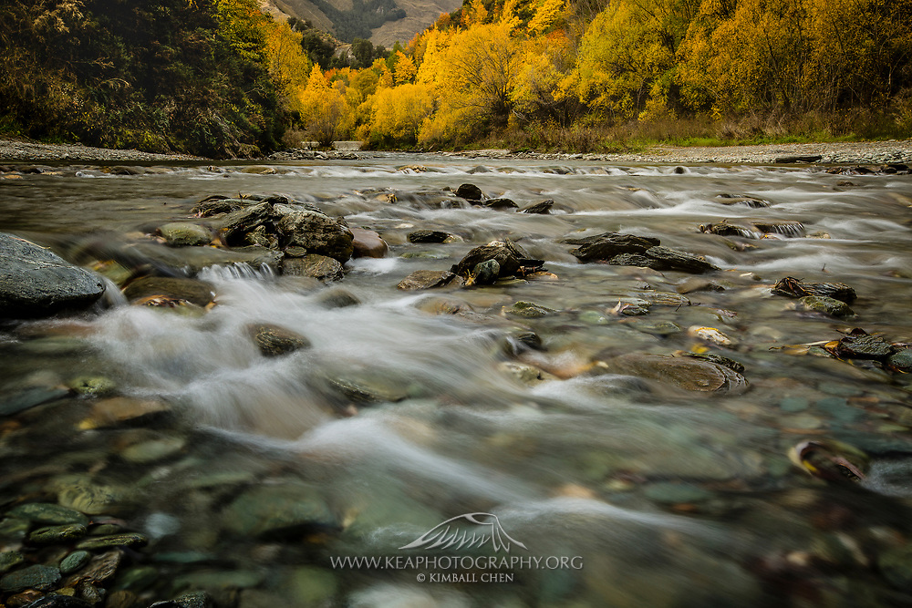 Sunlight breaks through the forest along the banks of Arrow River in Arrowtown, New Zealand.