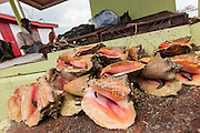 Fresh conch being sold at a roadside food stall at Potter's Cay in Nassau, Bahamas.
