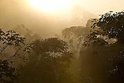 Parauapebas_PA, Brazil.<br /> <br /> Carajas National Forest, Para, Paraupebas, Brazil. <br /> <br /> Foto: JOAO MARCOS ROSA / NITRO