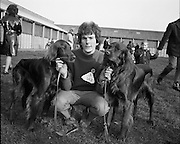 RDS Dog Show.17.03.1972..03.17.1972..17th March 1972..The annual Irish Kennel Club Dog Show took place today at the RDS (Royal Dublin Showgrounds).It coincided with the Kennel Clubs Golden Jubilee...Image shows Mr Eugene Condon of Kilworth,Co Cork with his prize winning Irish Setters, Argot Rock (L) and Heather Bowl.