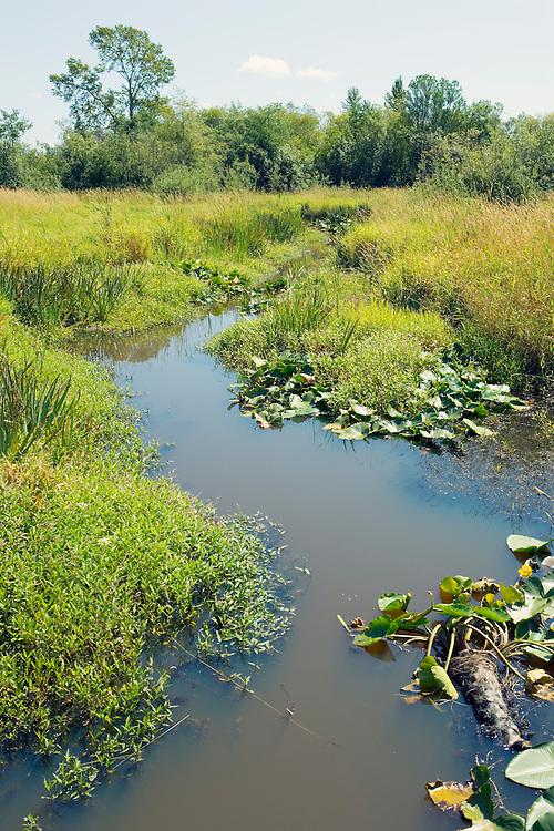 Path of muddy water through wetland vegetation.